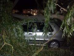 Araçlar fırtınanın devirdiği ağaçların altında kaldı