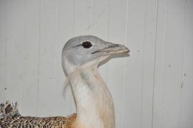Elektrik çarpan toy kuşu tedavi altına alındı
