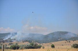 Sandıklı'daki yangında 5 hektar ormanlık alan kül oldu