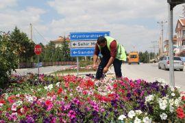 Şuhut'ta çiçekler açıyor