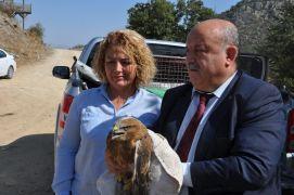 Afyonkarahisar'da tedavi edilen kızıl şahinler doğaya bırakıldı