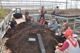Sandıklı'da jeotermal serada yılda 3 milyon meyve fidanı üretiyor