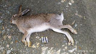 Vurulan tavşanın mülkiyeti kamuya geçirildi