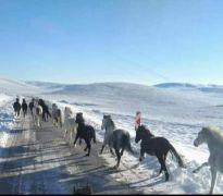 Yılkı atları için doğaya 2 ton yem bıraktılar