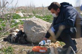 Afyonkarahisar'da sokak hayvanlarına mama desteği