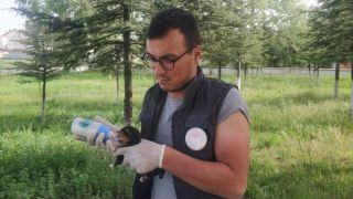 Poşetin içerisinde ölüme terk edilen köpek yavruları son anda kurtarıldı