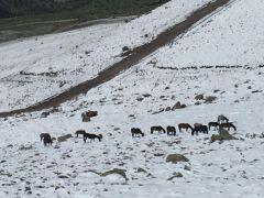 Şuhut'ta kar yağışı
