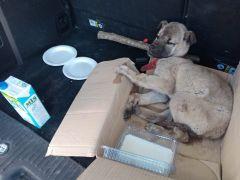 Akdağ'da donmak üzere olan köpeğin imdadına vatandaşlar yetişti