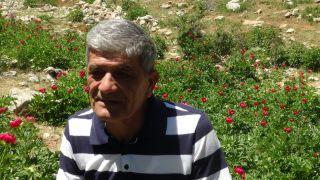 'Ayı Gülü' çiçeğini koparana 80 bin 465 lira ceza var