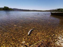 (ÖZEL) Büyük Menderes Nehri'nde kuraklıktan dolayı kuruma tehlikesi baş gösterdi