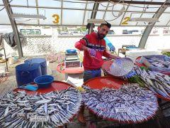 Balık sezonu açıldı, tezgahlarda hamsi bolluğu yaşanmaya başlandı