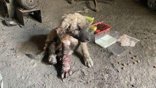 (ÖZEL) Otomobilin ezdiği ve kanlar içinde kalan köpeğe vatandaşlar sahip çıktı